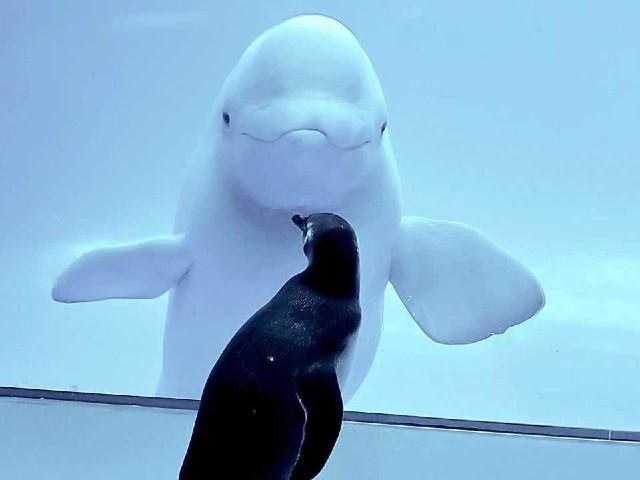 イルカとペンギン