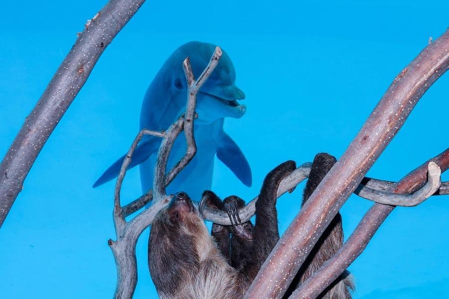 イルカとナマケモノ