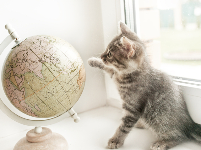 猫と地球儀