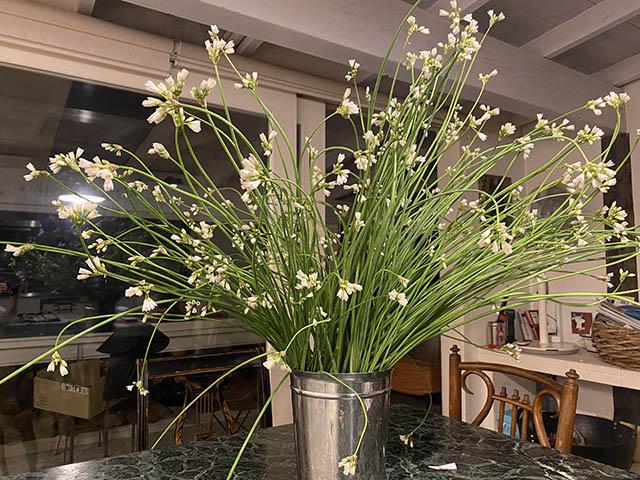 庭ニラの花