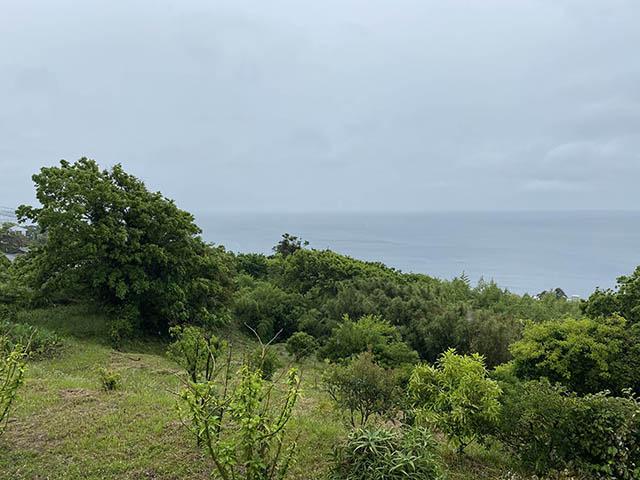 空、海、樹木