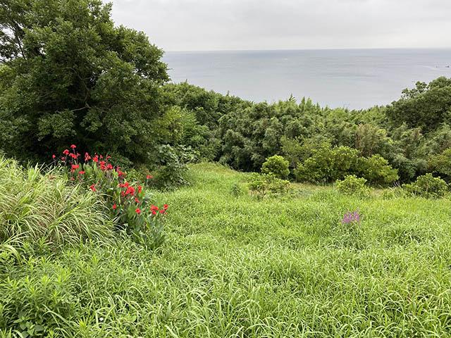 森とカンナと海