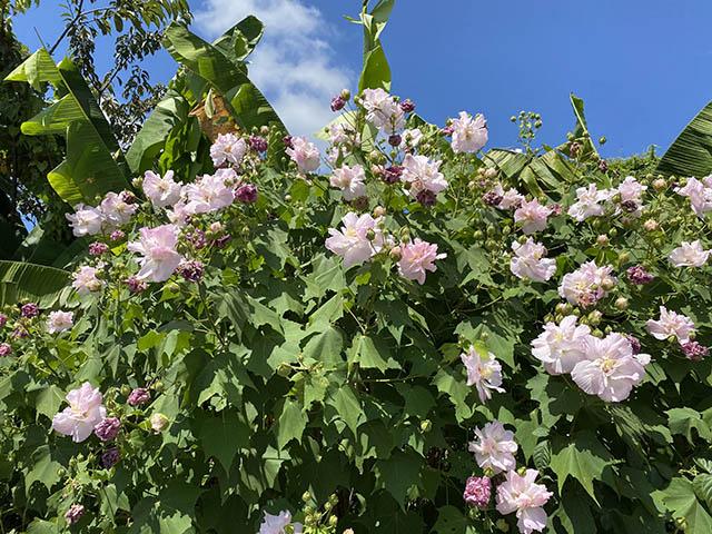 青空と疲れた花