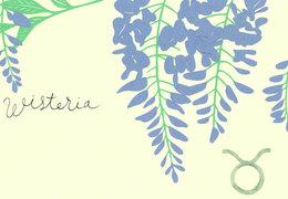 TO‐RUから「藤の花」のあなたへ愛のメッセージ(5月10日~6月9日)