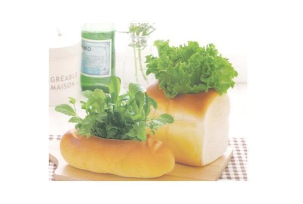 20120406_breadplant