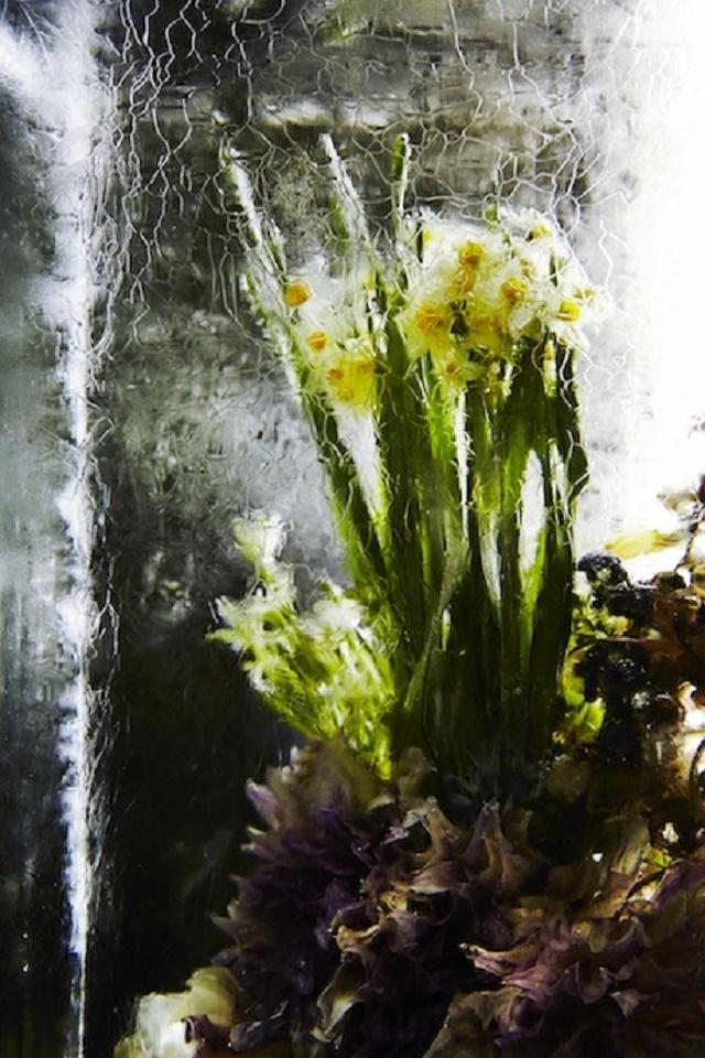 150122ECICED-FLOWERS-5