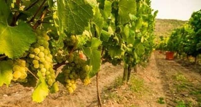 150422_wine_01