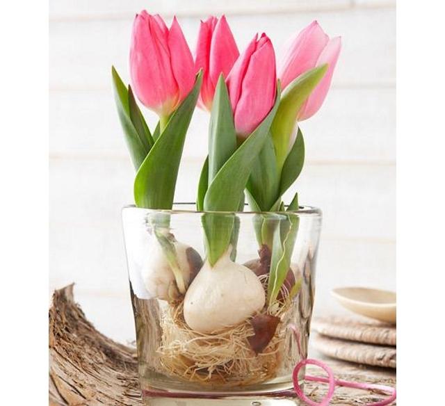 20150327_tulip_01