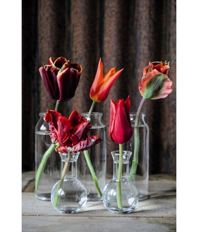 20150327_tulip_05