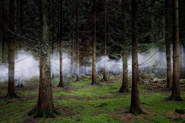 150618ECBetween-the-Trees-1