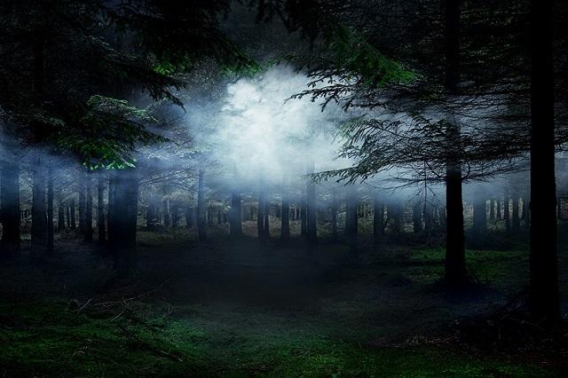 150618ECBetween-the-Trees