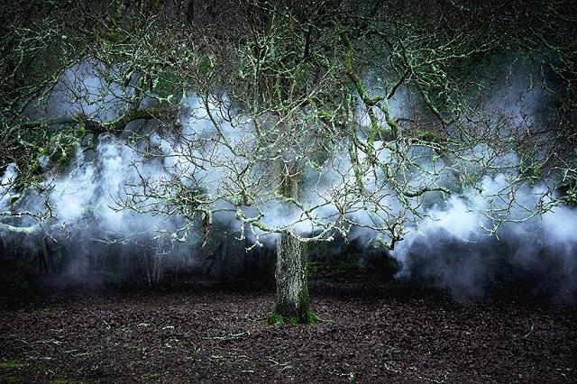 150618ECBetween-the-Trees3