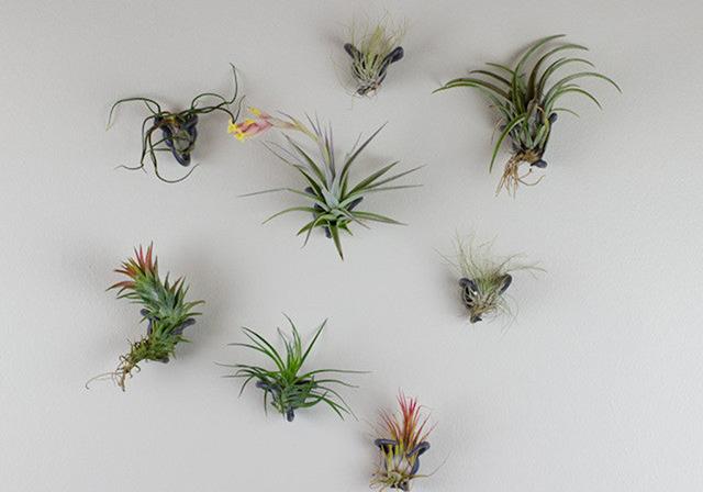 150716airplants3