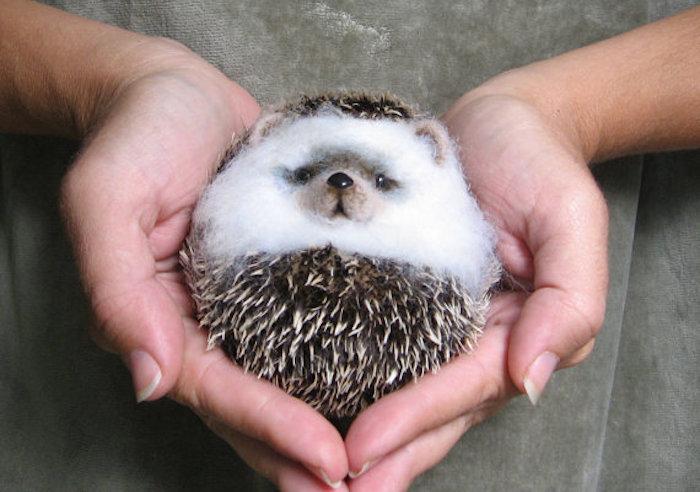 151026_EC_hedgehog