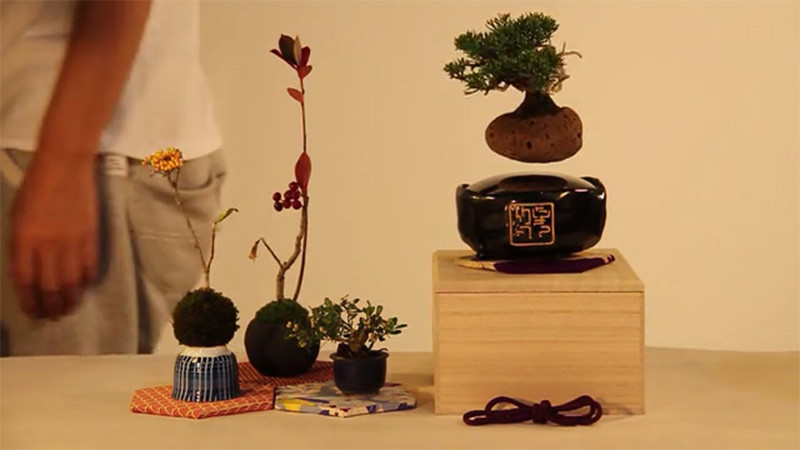 160126ECfloatingbonsai2