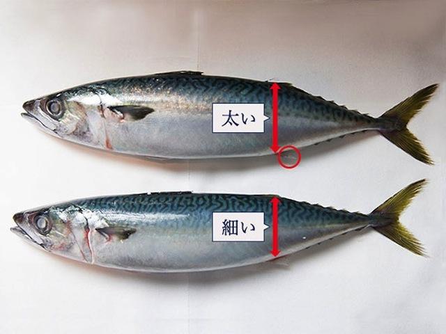 2_shimesaba_02043
