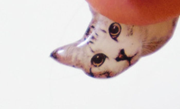 LEO_THE_CAT_eyecatch
