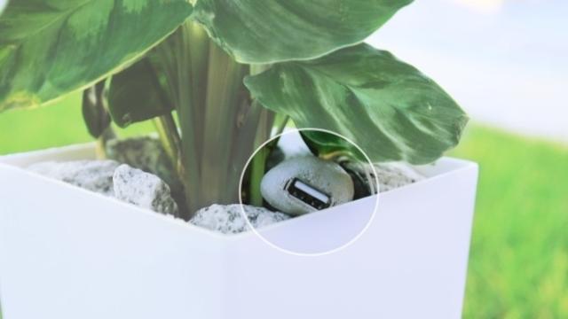 植物グリーン発電Bioo3