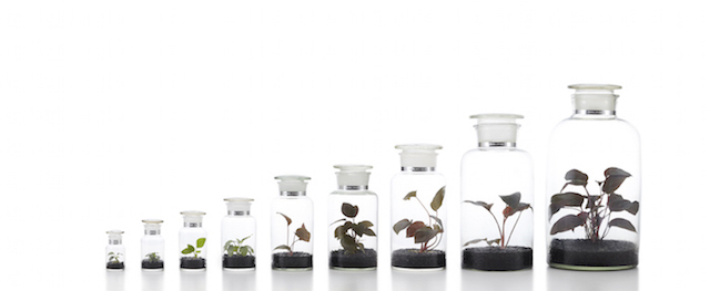 植物ボトル
