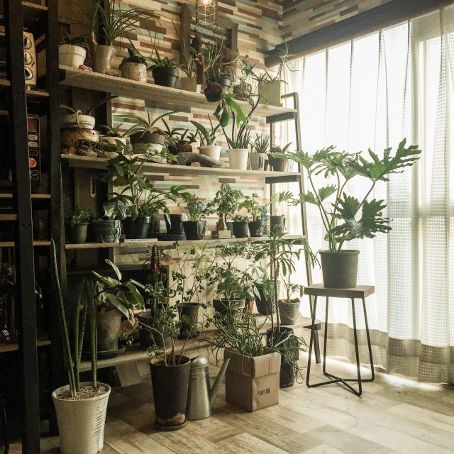 IKEAの棚であるLERBERGを植物を飾るグリーンラックにDIY_5