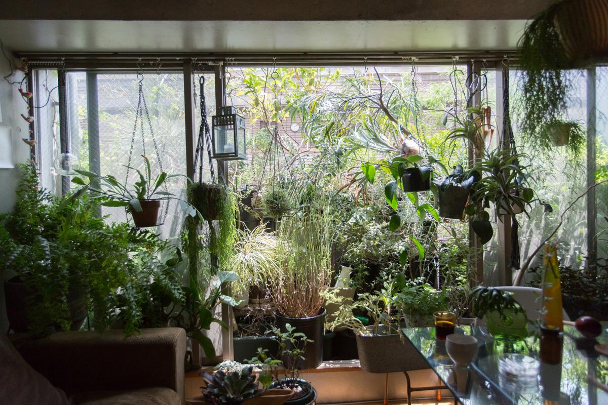 観葉植物のあるインテリアまとめvol.1。部屋に緑を …