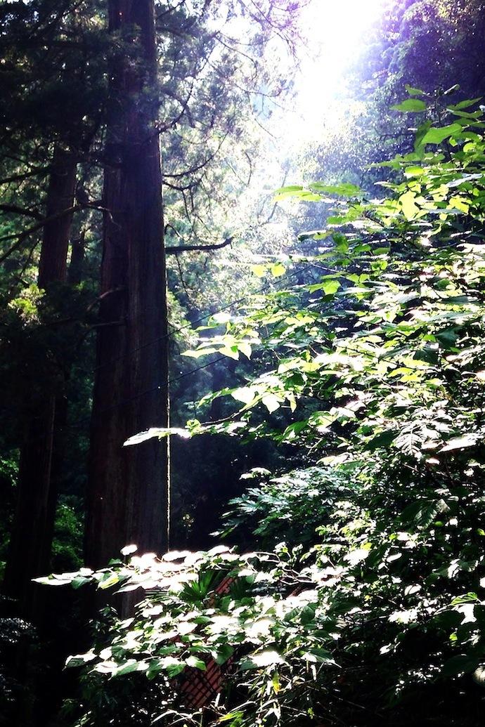 「土に還る」というコンセプトのもと、杉などの間伐材を丸太から削り出してつくられた「Timber Pot(ティンバー・ポット)」。生みの親は福井県河和田地区に拠点を構える「ろくろ舎」の酒井義夫さん。インテリアライフスタイル東京やヤングデザインアワードを受賞し、ドイツ・フランクフルトで開催された国際見本市「アンビエンテ(Ambiente)」にも招待されました。5