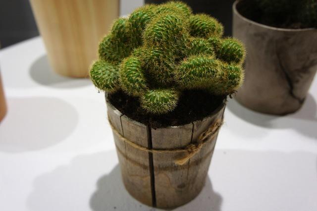 「土に還る」というコンセプトのもと、杉などの間伐材を丸太から削り出してつくられた「Timber Pot(ティンバー・ポット)」。生みの親は福井県河和田地区に拠点を構える「ろくろ舎」の酒井義夫さん。インテリアライフスタイル東京やヤングデザインアワードを受賞し、ドイツ・フランクフルトで開催された国際見本市「アンビエンテ(Ambiente)」にも招待されました。1