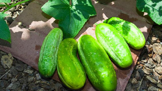 「すぐ枯らしてしまう」性格なためなかなか家庭菜園を続けられない人のための、育てやすい野菜と、その詳しい育て方をご紹介。レタスなどの葉野菜、トマト、キュウリ、ニンジン、カブ、ラディッシュ、サヤインゲン、ズッキーニなど。これさえ読めば、家庭菜園マスターになれるでしょう。3
