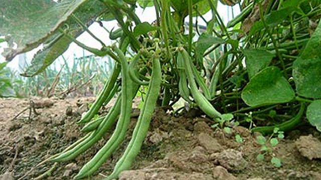「すぐ枯らしてしまう」性格なためなかなか家庭菜園を続けられない人のための、育てやすい野菜と、その詳しい育て方をご紹介。レタスなどの葉野菜、トマト、キュウリ、ニンジン、カブ、ラディッシュ、サヤインゲン、ズッキーニなど。これさえ読めば、家庭菜園マスターになれるでしょう。6