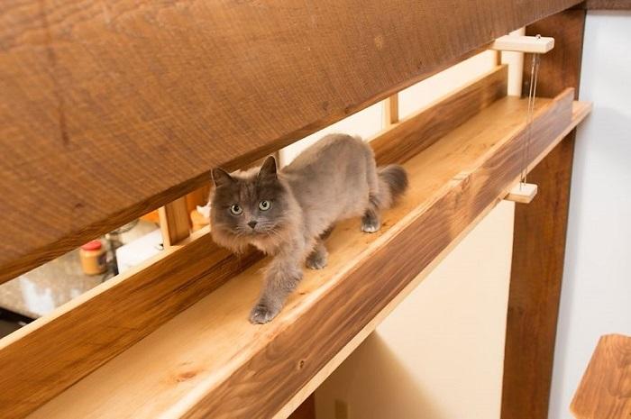 アメリカにクラス猫好きの2人組が愛ネコの為に改造した家の紹介。手がけたのは米国でハンドメイド・キャットタワーを販売するMountain PET Productsのレベッカさん。人間の生活の邪魔にならないスペースにキャットタワーとキャットウォークを作りました8