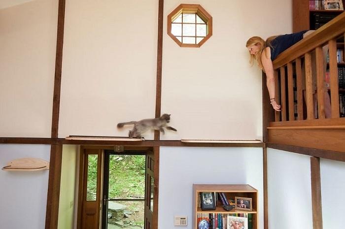 アメリカにクラス猫好きの2人組が愛ネコの為に改造した家の紹介。手がけたのは米国でハンドメイド・キャットタワーを販売するMountain PET Productsのレベッカさん。人間の生活の邪魔にならないスペースにキャットタワーとキャットウォークを作りました9