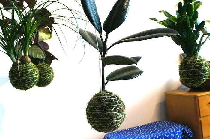 スウェーデンはマルメでもっともクールなエリアにある人気のショップ「Flora Linea」に並ぶのは、日本の盆栽の手法「根洗い」でつくられた「世界に一つだけの苔玉」。日本から8,600kmも離れた土地で、日本の盆栽に魅了された女性を紹介します。top