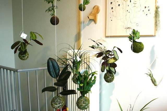 スウェーデンはマルメでもっともクールなエリアにある人気のショップ「Flora Linea」に並ぶのは、日本の盆栽の手法「根洗い」でつくられた「世界に一つだけの苔玉」。日本から8,600kmも離れた土地で、日本の盆栽に魅了された女性を紹介します。4