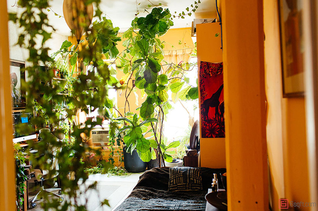 ニューヨーク在住のモデルのSUMMER RAYNE OAKESさんは、観葉植物、多肉植物、ハーブ、野菜など、500もの多種多様な植物と生活しているそうです。そんな彼女の都会で植物と共生する暮らし、覗いてみませんか?1