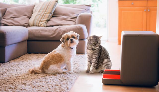 餌が少なくなったら自動で注文してくれる餌やりマシーン「easyFeed」の紹介です。餌を自動で注文するという、ほかの餌やりマシーンにはない機能で飼い主をサポート。空いた時間で、ペットにたっぷりの愛情を注いであげられそうです。 6
