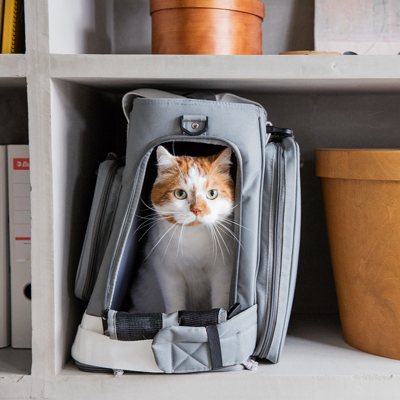 緊急事態に備え、ペットを飼っている人は「同行避難」を考えておく必要があります。災害時を想定してつくられたリュック型ペットキャリー「GRAMP」は、ペット災害のスペシャリスト平井潤子さん監修のもと、設計事務所imaがプロダクトデザインを担当。背面部分を開放すると簡易ケージに拡張できます。3