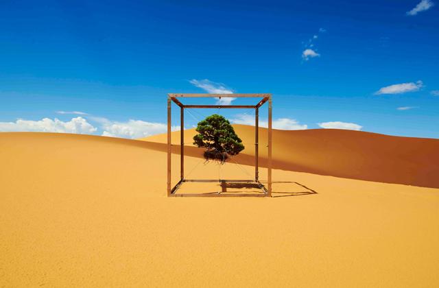 フラワーアーティスト、東信による、間欠泉や氷河、ブラックロック砂漠など、世界各地の絶景を盆栽が巡る写真をご紹介。どこに行っても盆栽は盆栽らしさを失わず、荘厳な美しさを見せてくれます。非日常的な景色に出会った盆栽から、よりいっそう自然のパワーを感じます。ネバダのブラックロック砂漠。