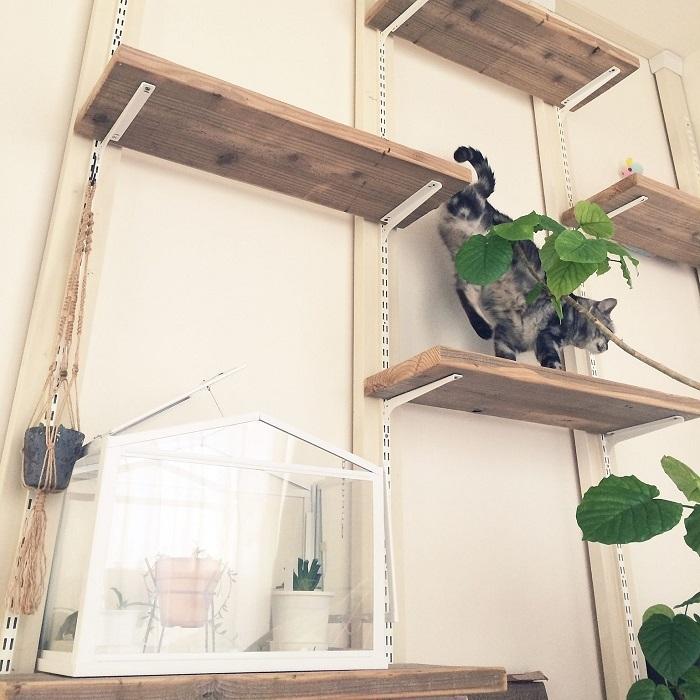 部屋の写真を共有するソーシャルサービスRoomClipから、mikomaruさんによる可動式キャットウォークを紹介します。ディスプレイや棚としても使えるキャットウォークです。躍動感あふれる猫の動きが、楽しさを物語り、白の壁に無理なく馴染むシンプルな作りも魅力的です。