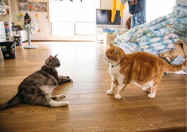リトルモアから発行された『荒汐部屋のモルとムギ』は、幕内力士・蒼国来(そうこくらい)を擁する荒汐部屋に住みついた2匹の猫と、力士たちの日常をおさめた写真集「荒汐部屋のモルとムギ」を紹介します。力士たちの和やかな日常生活を覗くことができます。