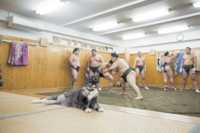 荒汐部屋の力士たちと、部屋に住みついた猫の暮らしが覗ける写真集 ...
