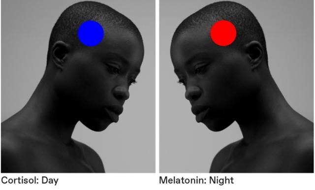 日光と同様の色味で室内を照らす、スマホやタブレットで制御できるペンダントライト「Kiën Light Licht 1」。そもそも人間は、時間帯によって脳の中で分泌される成分が異なり、朝起きる時の「コルチゾール」と、睡眠へ導くホルモン「メラトニン」の分泌には日光が大きく影響します。8