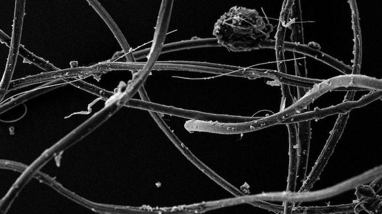 新たな研究によると、1回洗濯するたびに70万本もの顕微鏡でしか見えないほど微細なファイバーが放出されていることがわかりました。そのファイバーは下水処理場のフィルターをすり抜けられるほど小さく、自然環境へ流れ出し、壊れやすい生態系を脅かしているんだとか。