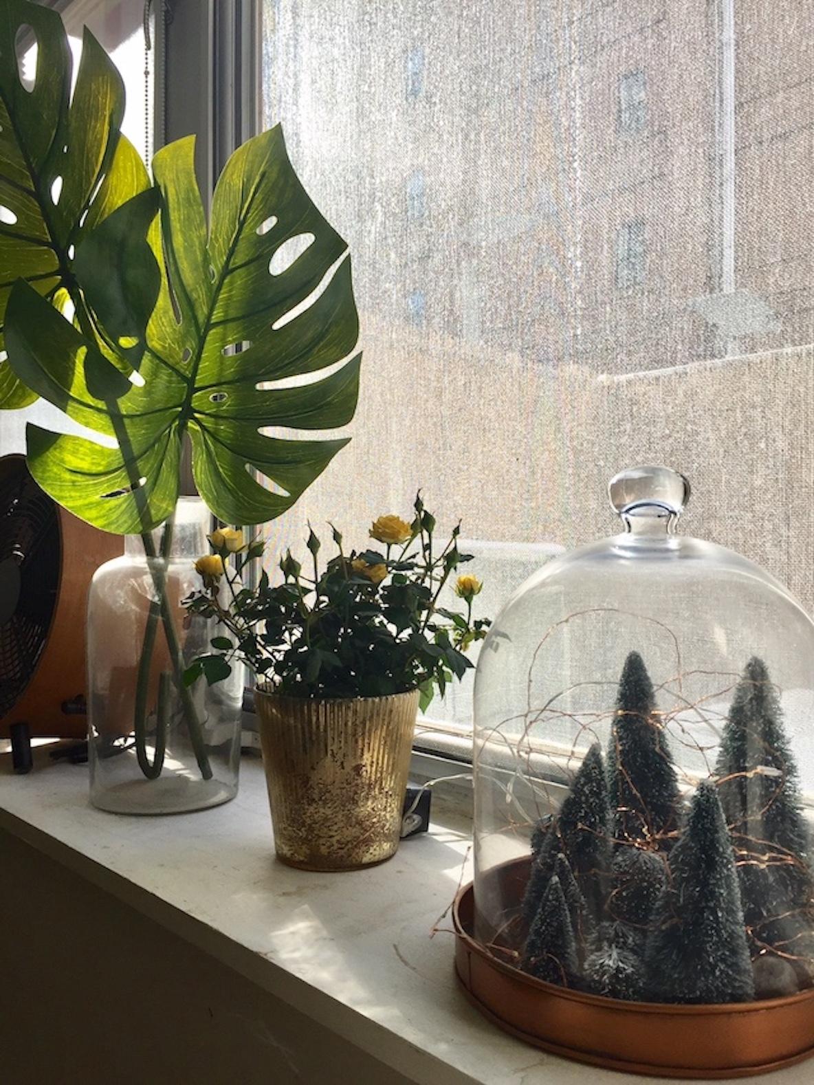 植物の飾り方