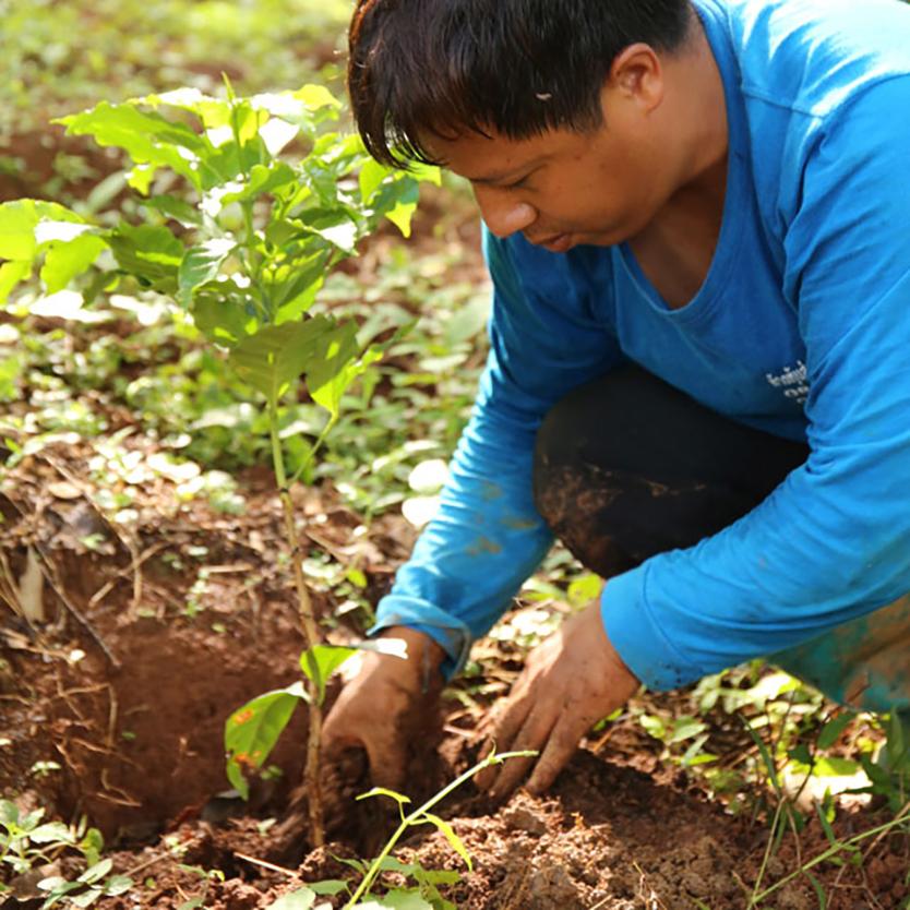 Café & meal MUJIのオリジナルブレンドコーヒー豆をつくるコーヒー農家