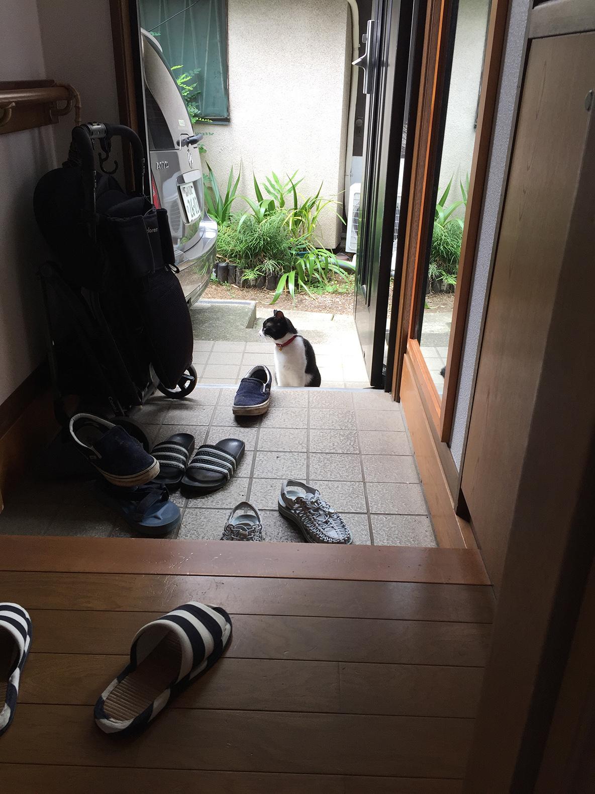 家に野良猫が遊びに来た