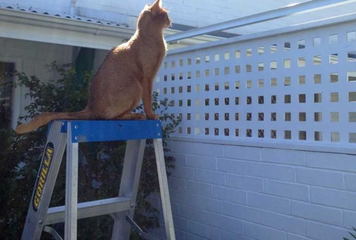 脚立など猫の脱走を助けるものは置かないこと!