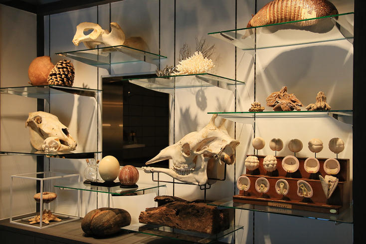 「カフェ」は2015年9月、気軽に自然の造形美を楽しむことができるようにとオープン