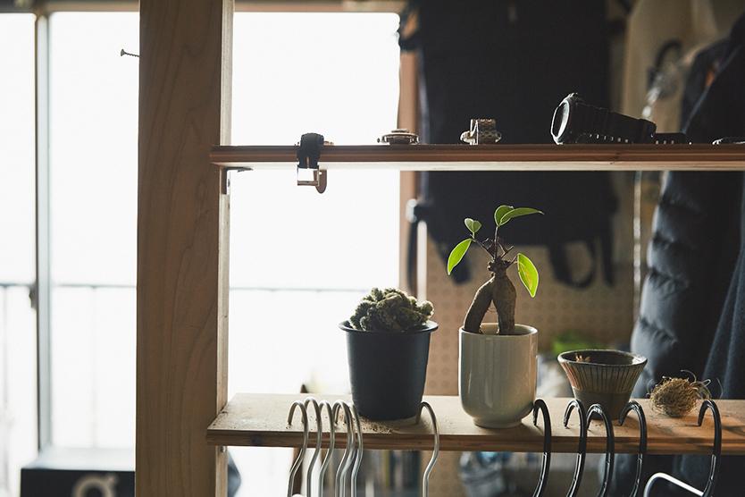 部屋に植物を置く