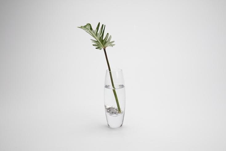 花瓶に入れると花が長持ちするすずテト