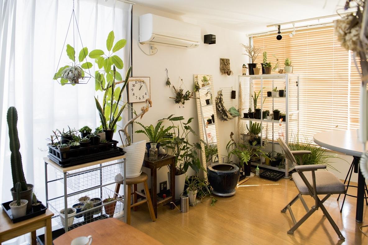 自然が身近にあった鎌倉をなつかしく思い、部屋に植物を置くようになった